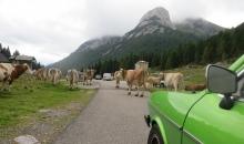 Alpentour 2015 Tag6 091