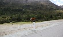 Alpen Tag 2 024