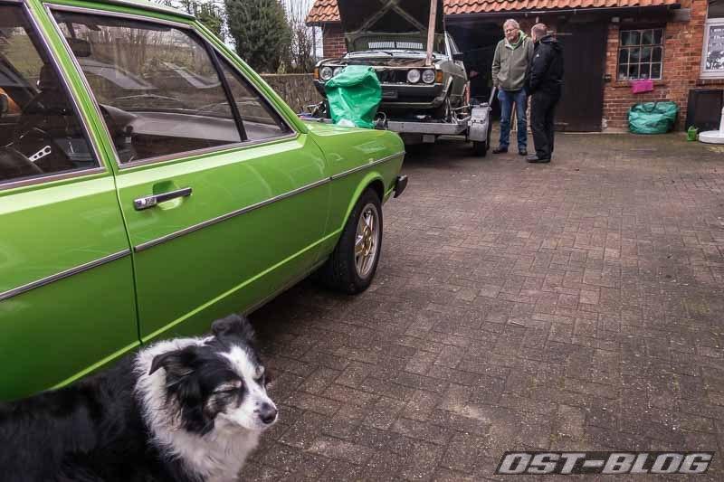 hund-und-auto